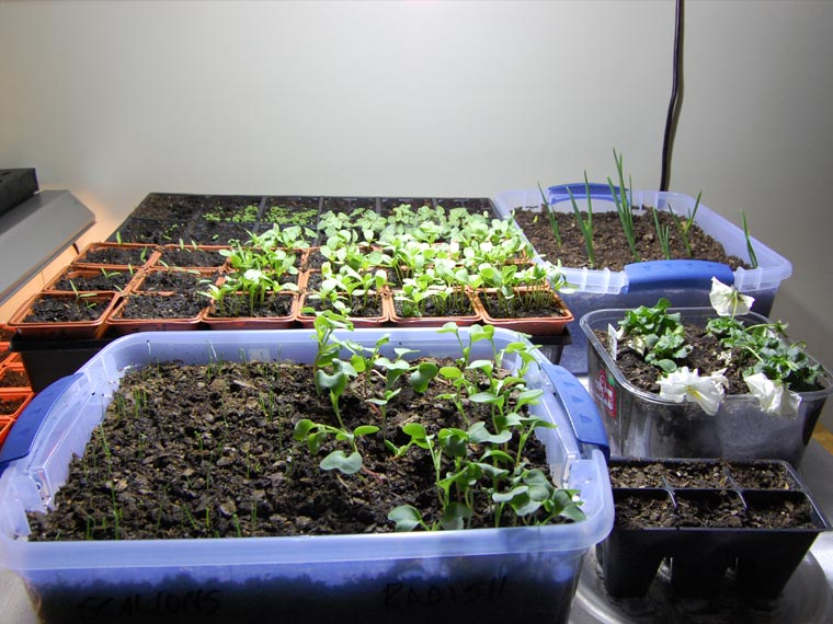 All You Need To Know About Starting An Indoor Garden Simple Living Redefined